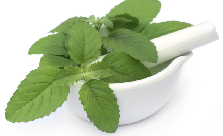 25 Extraordinary Health Benefits Of Basil Leaves (Tulsi)